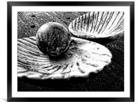 Shell and Pearl, Framed Mounted Print