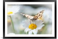 Painted Lady, Framed Mounted Print
