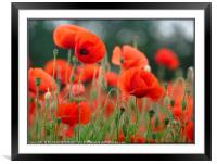 """Soft Poppies"", Framed Mounted Print"
