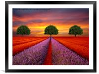 The Three tree's , Framed Mounted Print