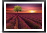 the little green tree , Framed Mounted Print