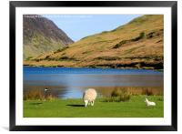 Spring at Crummock Water, Framed Mounted Print