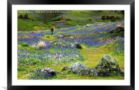 Walk among the bluebells, Framed Mounted Print