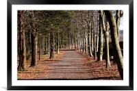 Avenue of tress at Alnwick Gardens, Framed Mounted Print