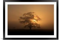 Tree silhouette in fog, Framed Mounted Print