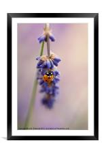 Ladybird and Lavender, Framed Mounted Print