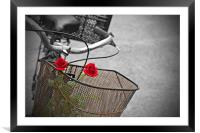 Red roses in basket of old rusty bicycle, Framed Mounted Print