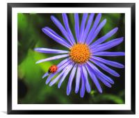 The runway of a ladybird, Framed Mounted Print
