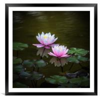 Water Lilies, Framed Mounted Print