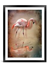 flamingo, Framed Mounted Print