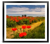 Pathway to the Poppies, Framed Mounted Print