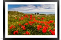 The floral beauty of Bamburgh, Framed Mounted Print