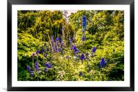 Flowers of Howick Hall, Framed Mounted Print