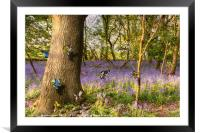 Butterflies in a blubell woodland, Framed Mounted Print