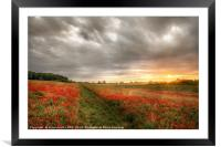 Path through wild poppies at dawn, Framed Mounted Print
