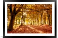 Amazing forest colours in autumn fall, Framed Mounted Print