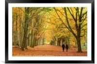 Autumn walk in the woodland, Framed Mounted Print