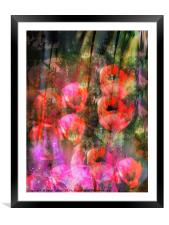 Wild Poppies , Framed Mounted Print