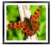 Comma, Framed Mounted Print