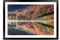 The Buttermere Pines, Framed Mounted Print