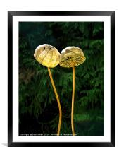 Two Little Shrooms, Framed Mounted Print
