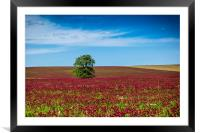 Red clover field and blue sky in summer day., Framed Mounted Print