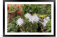 Flowers of cactus, Framed Mounted Print