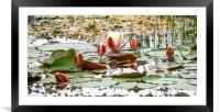 The Pond., Framed Mounted Print