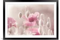 Pink Poppy Time , Framed Mounted Print