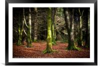 Into the Woods, Framed Mounted Print