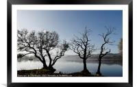 Trees by Ullswater in the Lake District, Framed Mounted Print