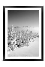 Snowy forest in Quebec, Framed Mounted Print