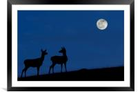 Red Deer Hinds at Night, Framed Mounted Print