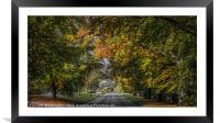 Autumn Canopy, Framed Mounted Print