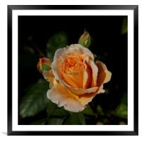 CROWN PRINCESS MARGARETA                          , Framed Mounted Print