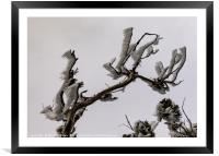 Wind Iced Branches, Framed Mounted Print