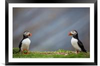 Puffin bookends, Framed Mounted Print
