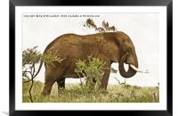 Elephant Earth Dousing, Framed Mounted Print