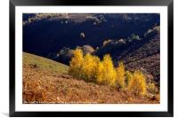 Autumn at Trendlebere Down, Framed Mounted Print