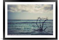 Dried branches emerge from the Carribean sea of Ar, Framed Mounted Print