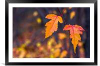 Autumn leaves on a blurry background, Framed Mounted Print