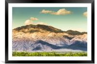 Landscape Joshua Tree 7370, Framed Mounted Print