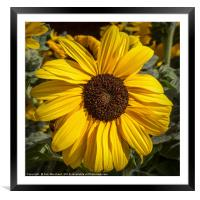 Reflecting the Sun, Framed Mounted Print