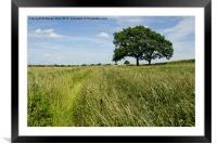 Gosbecks Fields, Colchester, Essex, Framed Mounted Print