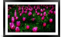 Tulips   Abstract on Green, Framed Mounted Print