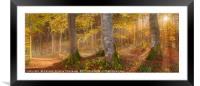 Sunshine through autumn forest, Framed Mounted Print