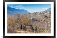 Mountain bikers in Valtellina, Italy , Framed Mounted Print