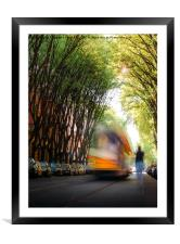Moving tram on tree-lined path , Framed Mounted Print