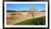 Melia azedarach planted in mining land, Framed Mounted Print