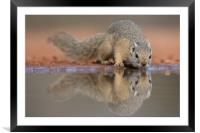 Squirrel mirror, Framed Mounted Print